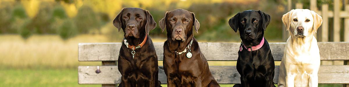 Der Hundeführerschein, Bayerische Landestierärztekammer